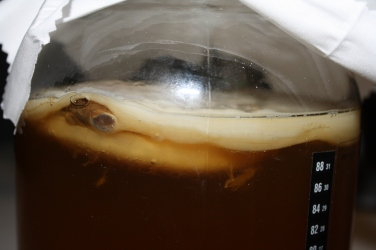 Day 14 - Clearly see 2 SCOBYs