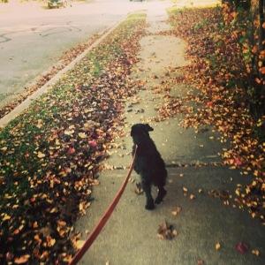 Belle Walk